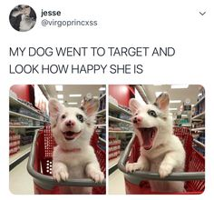 THAT IS THE TARGET DOG