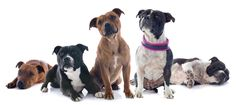 THE BASICS OF CRATE TRAINING YOUR PIT BULL What does it mean when you are crate training your Pit Bull? Crate training is also known or called as crate and den training. There seem to be some questions with regards to this type of training as some may consider it quite cruel. Is it? And what is its' exact nature?
