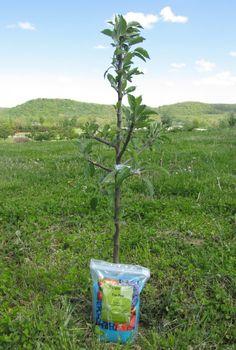 How to Fertilize New Fruit Trees | #starkbros