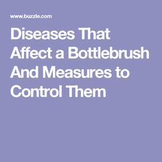 Diseases That Affect a Bottlebrush And Measures to Control Them Bottlebrush, Fungal Infection, Flowering Trees, Summer Garden, Plant Care, Pink Flowers, How To Find Out, Gardening, Green