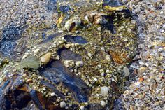 #ThracianSea #Greece #Greekvacation #Mypet #swim #sand #sea #summer  http://cvetybaby.com/thracian-sea/