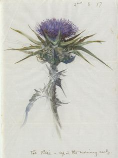 Botanical Painting by John Ruskin ~ Scottish Thistle. Botanical Drawings, Botanical Prints, Watercolor Flowers, Watercolor Art, Thistle Tattoo, Thistle Flower, Milk Thistle, John Ruskin, Scottish Thistle