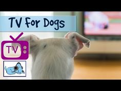 Tv For Dogs Combined with Soothing Music for Dogs - Relaxing Visuals for dogs - Calm your dog - YouTube
