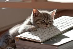 What I look like on my 'puter board after a long night of pinning cute animal pics!!!