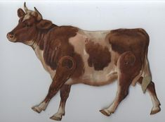 THE COW OF THE COMMON OX (BOS TAURUS