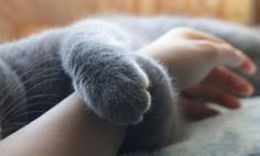 Aww. That tender moment just before Kitty shreds your hand with his back claws.