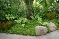 tropicalgardenideas native Bodendecker, # Bodendecker Well, the Ground Cover Plants, Sloped Garden, Garden Landscape Design, Plants, Ferns Garden, Native Garden, Palm Garden, Native Plant Gardening, Australian Garden