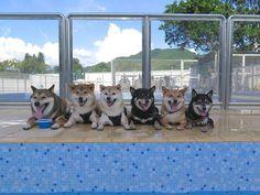 天国はここにあった!いつも一緒の「柴犬ファミリー」が史上最高にかわいい(画像17枚) - エキサイトニュース