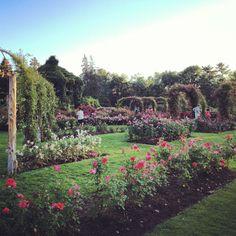 Elizabeth Park Rose Garden, Hartford Connecticut