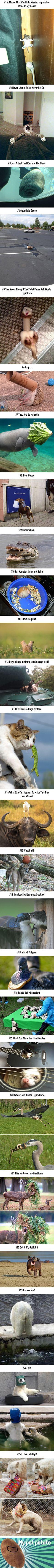 25 Funniest Animal Fails Ever