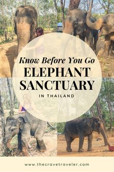 Ever wanted to go to an elephant sanctuary in Thailand but not sure what to expect? Well here's 5 things you should know before you go! Phuket Travel, Thailand Vacation, Thailand Travel Tips, Thailand Photos, Phuket Thailand, Asia Travel, Cambodia Travel, Best Elephant Sanctuary Thailand, Monkey Beach Thailand