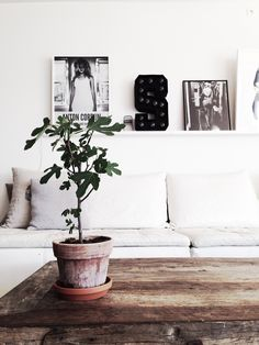 Figtree Nordic Design, White Houses, Love Flowers, My Dream Home, Entryway Bench, Future House, Interior Inspiration, Living Room, Interior Design
