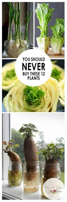 You Should NEVER Buy These 12 Plants| Vegetable Gardening, Vegetable Gardening Tips and Tricks, Plants You Should Never Buy, Easy to Grow Vegetables, Vegetables That Are Easy to Grow, Popular Pin