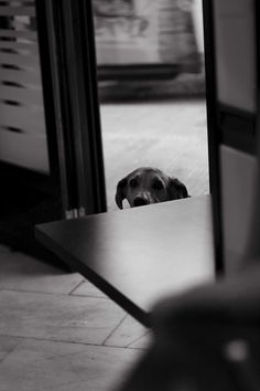 Perro anónimo, julio 2014. Chamberí