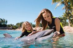 Should swimming with dolphins be banned in Hawaii?