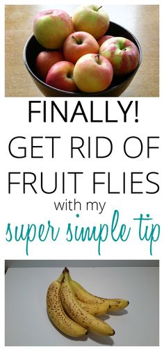 Tired of fruit flies? Use my super simple tip and get rid of them now. My tip never fails. Takes seconds to set up and will get rid of those pesky bugs overnight while you sleep. via @SLcountrygal
