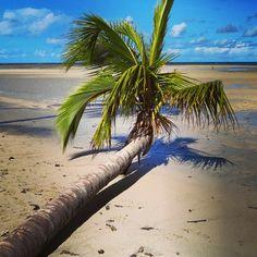 A Praia do Moreré, situada na costa leste da Ilha de Boipeba (BA), abrange uma bela enseada de águas tranquilas, cercada de recifes de corais, situados a cerca de 500 metros da costa. Foto: @Trilhas e Aventuras Cia