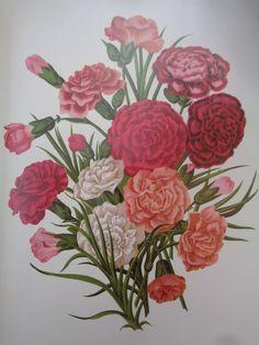 Garofani - Carnations https://lefotodiluisella.blogspot.it/2017/05/garofani.html