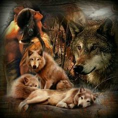 Native American Indians already knew, centuries ago - the wolf is integral to the eco-system . Native American Paintings, Native American Wisdom, Native American Pictures, Native American Beauty, American Indian Art, Native American History, American Indians, American Symbols, American Women