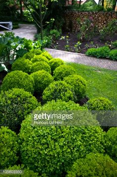 View top-quality stock photos of Ball Shaped Box Topiary In Garden Border. Find premium, high-resolution stock photography at Getty Images. Box Hedging, Garden Shrubs, Garden Borders, Topiary, Hedges, Curb Appeal, Garden Design, Planters, Shapes