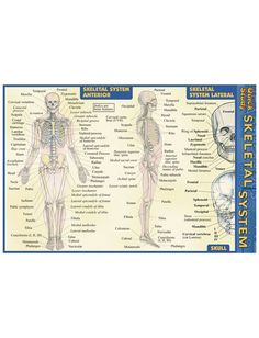 Uniform Advantage offers a vast assortment of medical scrubs and uniforms that are comparable to both Lydia's & Tafford uniforms. Cervical Vertebrae, Medical Pictures, Uniform Advantage, Scapula, Skeletal System, Free Ebooks, Outline, Emergency Kits, Skin Care