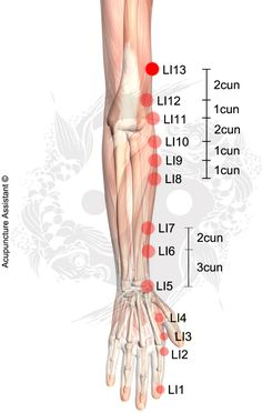 Point Localization: 3 cun above the LI11 (elbow crease). TCM Actions: Relaxes the tendons. Remove Phlegm. Removes stagnation of Qi and Blood (Xue). Indications: Pain, spasm and contracture in the elbow, shoulder and arm. Rheumatoid arthritis. Pneumonia. Scrofula. Pleurisy. Peritonitis. Hemoptysis. Tuberculous cervical lymphadenopathy. Target area: Shoulder. Arm. Elbow. Point Name and Meaning: Shouwuli – …