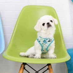 Need to add some tropical to your dogs life? look no further than the Puppia Rowan Dog Harness. Tropical Leaves, Dog Harness, Leaf Prints, Rowan, Shades Of Green, Dog Life, Your Dog, Aqua, Australia