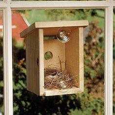 Window View Bird Nest Box