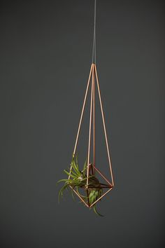 This air plant holder has a full diamond and four 8 inch upper arms. Your air plant will be safe and secure in this little number, and can settle in for the long haul in style. DIMENSIONS at furthest points inches high 2 inches Air Plants Care, Hanging Pots, Water Plants, Plant Holders, Rain Drops, Line Design, Dream Garden, Plant Hanger, Crafts To Make