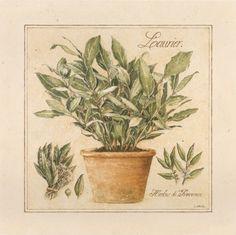 Herbes de Prevence I (Laurence David)