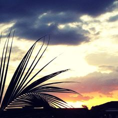 sunsets #splendidsummer
