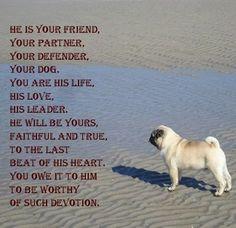 Image result for pug sayings