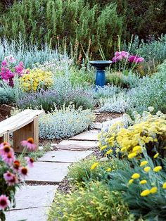 Tough-as-Nails Perennial Garden Plan Catmint >> Lavender cotton >> 'Moonshine' yarrow >> 'Munstead' lavender >> Penstemon >> Phlox >> Purple coneflower >>
