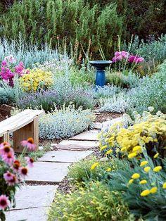 Tough-as-Nails Perennial Garden Plan  Catmint  >>  Lavender cotton  >>  'Moonshine' yarrow  >>  'Munstead' lavender  >>  Penstemon  >>  Phlox  >>  Purple coneflower  >>