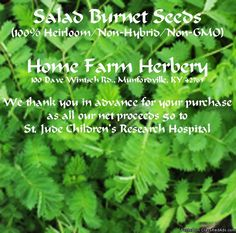 Salad Burnet heirloom seeds for sale. Just harvested at Home Farm Herbery and packed for planting in your garden or container. Order now & get free shipping. http://www.localharvest.org/salad-burnet-seeds-C26471