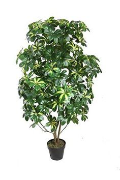 Felices Pascuas Collection 51 inch Decorative Potted Artificial Two Tone Green Scheffera Plant Tree
