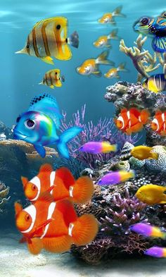 "Search Results for ""aquarium fish live wallpapers"" – Adorable Wallpapers Fish Wallpaper Iphone, Aquarium Live Wallpaper, Live Aquarium, Cellphone Wallpaper, Aquarium Fish, Mobile Wallpaper, Saltwater Aquarium, Colorful Fish, Tropical Fish"
