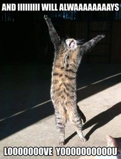Very interesting post: 24 Funny Cats and Kittens Pictures. Also dompiсt.сom lot of interesting things on Funny Animals, Funny Cat. - Tap the link now to see all of our cool cat collections!