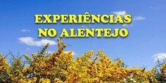 Sugestões de atividades e experiências no Alentejo. Prove a gastronomia, vinho e azeite. Parta à aventura. Descubra o artesanato. Aceite desafios.