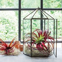 Bring the outdoors in with a modern terrarium perfect for air plants.
