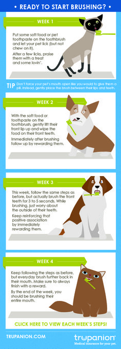 Simple steps to start brushing your pet's teeth!