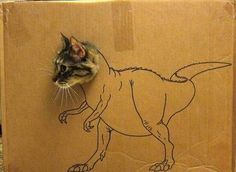 t-rex cat. This is my cat's name. I Love Cats, Cute Cats, Funny Cats, Funny Animals, Cute Animals, Farts Funny, Funny Humor, Funny Stuff, Rex Cat
