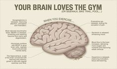 YOUR BRAIN LOVES THE GYM! This image shows you what each part of your brain does when you exercise!