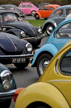 Vw Bugs :) Mom bought one metalic royal blue one in the late 70's