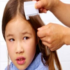 Essential Oil Treatment For Head Lice @adviceonlicemd