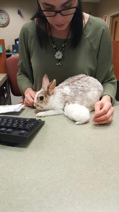 Bunnies, Corgi, Rabbit, Adventure, Animals, Bunny, Animaux, Rabbits, Rabbits