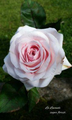 Pale pink sugar rose by La Lavande sugar florist.