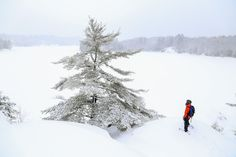 The Ontario Provincial Park winter yurt experience in Northeastern Ontario is uniquely Ontario Provincial Parks, Ontario Travel, Travel Planner, Camping, Winter, Places, Outdoor, Campsite, Winter Time