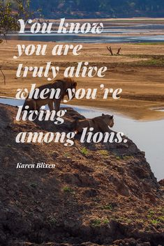 30 #Safari #Quotes to #Inspire You About #Africa. Looking for a new and exciting #adventure? These 30 famous quotes and safari #sayings will literally make you fall in #love with Africa! 😉 This is a very personal list. Some of these safari quotes first inspired me to #explore Africa, many many moons ago. These safari quotes continue to inspire me. #quote #travel #Blixen #KarenBlixen #lions #alive