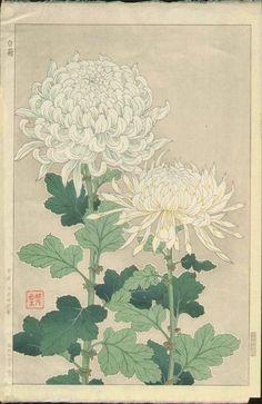 白菊 White Chrysanthemums 1954 | Shodo Kawarazaki  河原崎奨堂 ( Wood-block print )